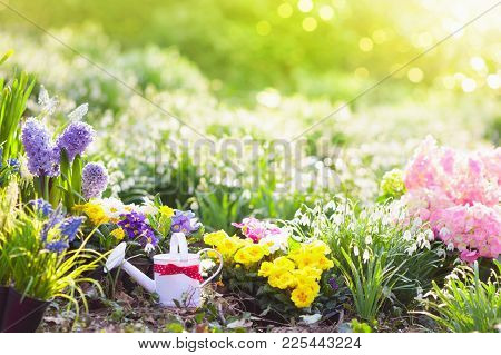 Beautiful Blooming Garden With Flower Bed On Sunny Spring Day. Watering Can, Shovel, Spade. Gardenin
