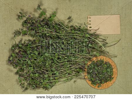 Glechoma Hederacea. Dry Herbs For Use In Alternative Medicine, Phytotherapy, Spa, Herbal Cosmetics.