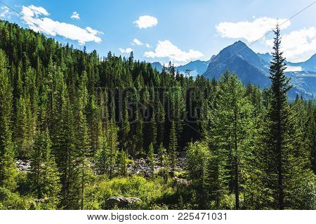 Summer Pine Forest And Cloudy Blue Sky Mountain Landscape