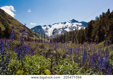 Mountain Flowers On A Background