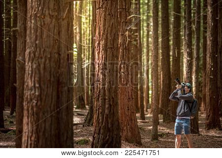 Young Male Photographer Wearing Green Cap Taking Photo In Redwood Forest (whakarewarewa Forest) Near
