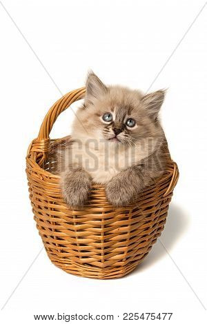 Cute Little Kitten In Wicker Basket Isolated Over White Background