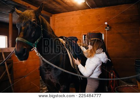Horse Preparation. Rider Combs Mane And Sets Saddle On Horse. Concept Of Cooking For Trip, Jumps, Ho