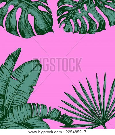 Tropical Palm Leaves On Pink Background. Minimal Nature Summer Concept. Flat Lay. Trendy Summer Trop