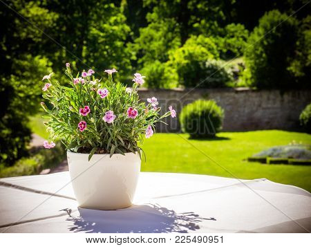 The Little Pansies In The Garden On The Table, In Summer, The Sunshine