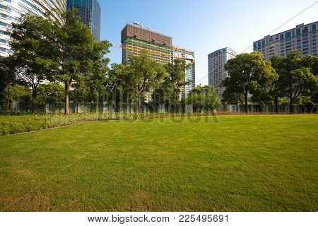 Empty Green Grass Tree With Buildings Background