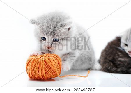 Small Grey Fluffy Adorable Kitten Is Playing With Orange Yarn Ball While Other Kitties Are Playing I
