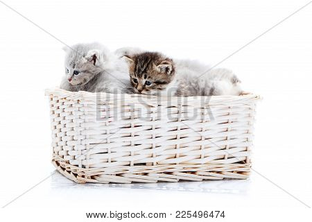 Small Brown Striped Fluffy Blue-eyed Kitten Sitting Among Other Cute Grey Kitties In White Wicker Ba