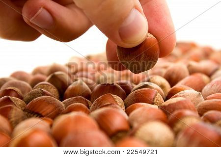 Selecting Hazelnut
