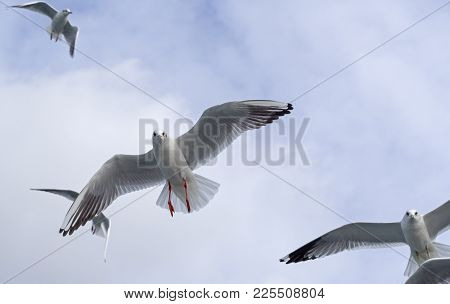 The Marine Gulls On A Blue Background