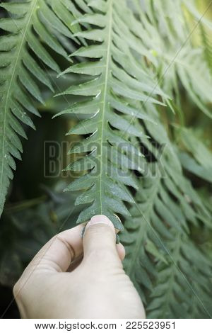 Woman Hand Touching Green Fern Leaf, Stock Photo