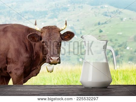 Milk In Glass Jug On Wooden Table With Cow In Meadow In The Background. Milk Against A Grazing Cow
