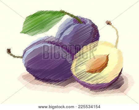 Vector Illustration Graphic Arts Sketch Of Drawing Fruit Plum With Half.