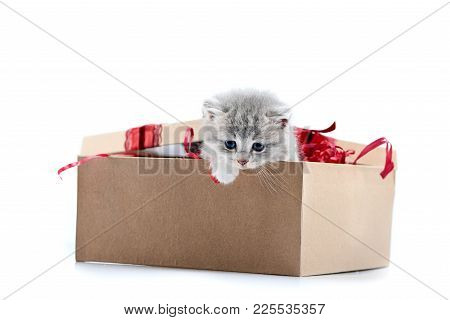 Little Grey Adorable Kitten Looking Out Of Decorated Birthday Box Being A Cute Present For Someone.