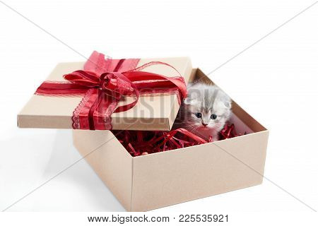 Small Grey Fluffy Adorable Kitten Sitting In Cardboard Box With Red Birthday Bow On Top Being A Pres