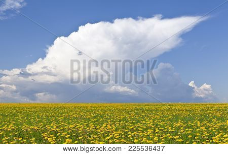 Fields Of Dandelion In The Landscape. Clouds In The Background.