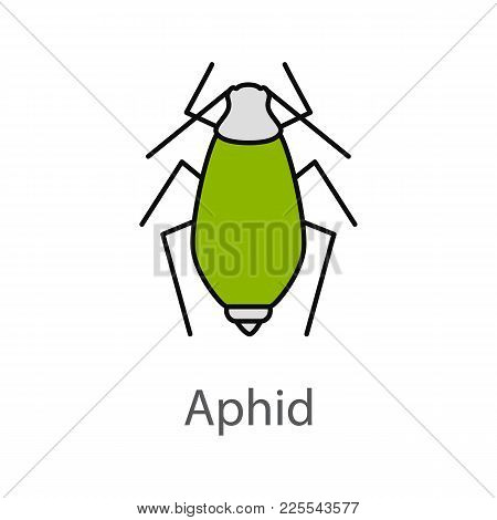 Aphid Color Icon. Insect Pest. Plant Lice. Isolated Vector Illustration