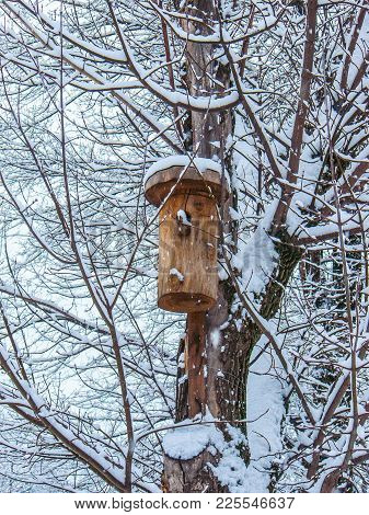 Birdhouse On Snow-covered Tree. Natural Background, Close-up Of An Adult Tree With A House For Birds