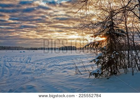 A Tiny Pine Tree Stands By The Snowy Fields On A Very Cold Day In The Northern Finland. The Sun Is S