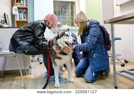 Girl With A Dog In The Office Of A Veterinarian At A Veterinary Clinic. Doctor In Medical Clinic Wor