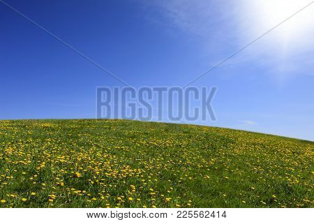 Hilly Meadows And Blue Sky. Grass And Dandelions This Side The Open Sky. Bright Sunshine.