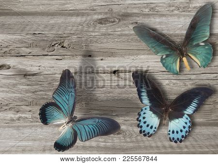 Three Blue Butterfly On Grey Wooden Background