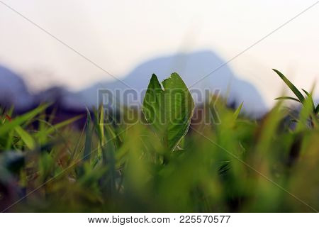 A Rotten Leaf In The Middle Of A Grass Field