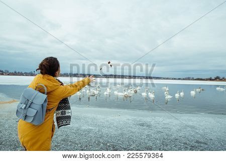 Woman Feed Swans On Frozen Winter Lake
