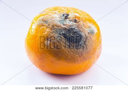 Rotten Mandarin On A White Background. Citrus Covered With Mold. A Spoiled Fruit. Close-up.