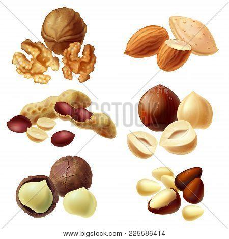 Vector 3d Realistic Set Of Various Nuts, Hazelnut, Macadamia, Peanut, Almond, Walnut, Pine Nuts, Who