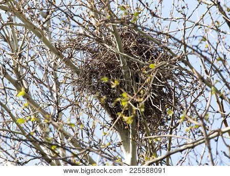 Nest On The Tree In Nature . In The Park In Nature