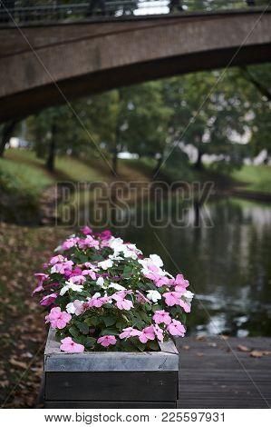 Beautiful Flowers In A Garden With An Arched Moon Bridge.