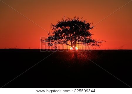 A Single Tree Sits In Silhouette As The Sunsets Over The Grasslands Of The Tallgrass Prairie Preserv