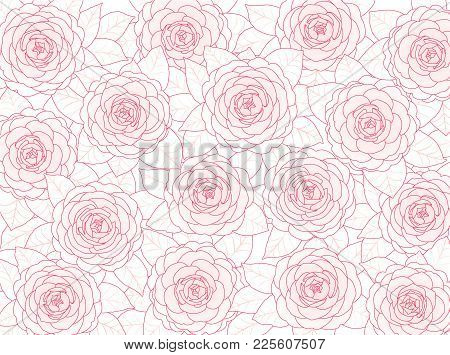 Pink Camellia Flowers On A White Background