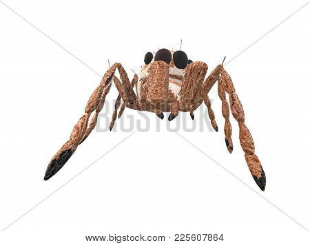 Brown Arachnid Seen From The Down Front Side
