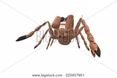 Brown Arachnid Seen From The Down Side
