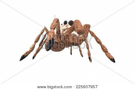 Brown Arachnid On A White Background Seen From The Down Side
