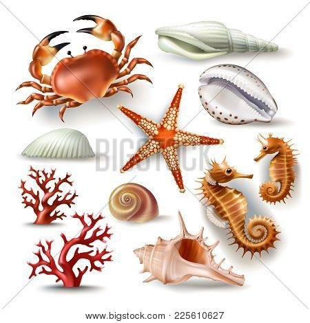 Set Of Illustrations, Badges, Stickers, Seashells Of Various Kinds And Coral, Crab, Starfish In Real