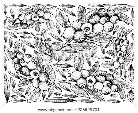 Berry Fruit, Illustration Wall-paper Background Of Hand Drawn Sketch Of Blueberry Fruits. High Invit