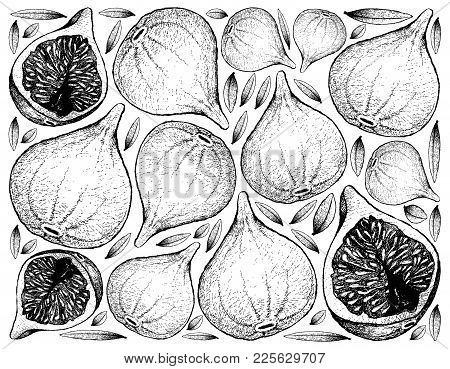 Fresh Fruit, Illustration Wall-paper Background Of Hand Drawn Sketch Delicious Fresh Figs Or Ficus C