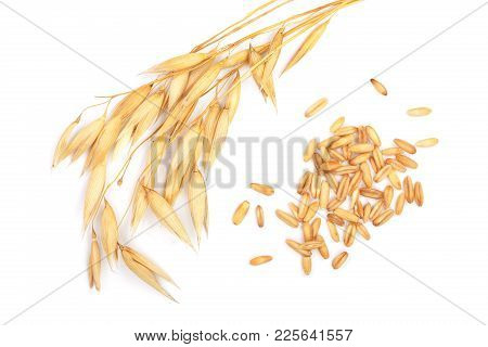 Oat Spike With Grains Isolated On White Background. Top View. Flat Lay.