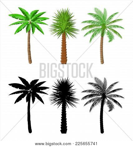 Tropical Green Palm Set. Jungle Leaves. Coconut Palm, Monstera, Fan Palm, Rhapis. Natural Leaf, Exot