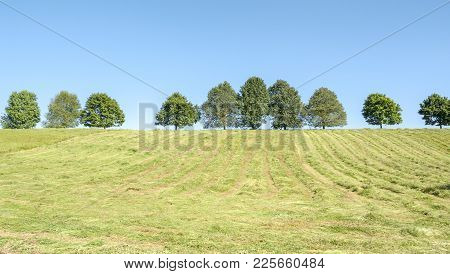 Sunny Scenery Showing A Hayfield With Fruit Trees At Spring Time In Hohenlohe, A Area In Southern Ge