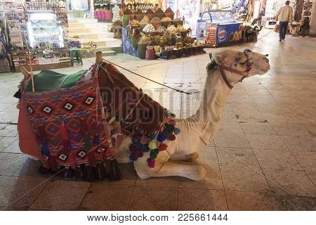 Sharm El Sheikh, Egypt - February, 2018: Camel In The Old Market Sharm El Sheikh. Camel Riding - Sti