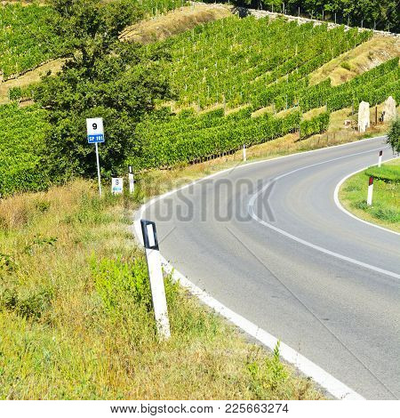 Tuscany Landscape With Asphalt Road And Vineyards. Road Between Vineyards In Italy