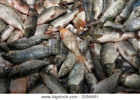 Fresh Fish At Market