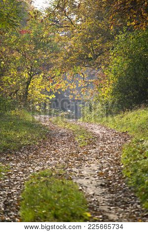 Road In The Forest With Trees With Green And Brown Leaves