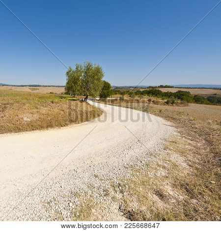 Stubble Fields On The Hills Of Tuscany. Tuscany Landscape After Harvest. Winding Dirt Road Between P