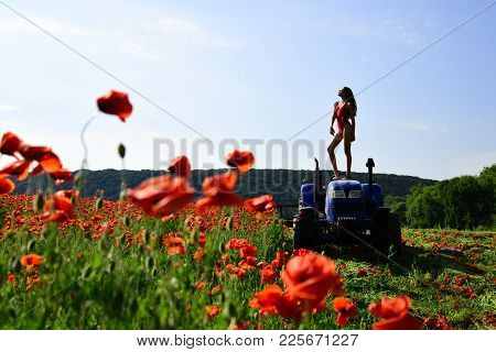 Woman Work In Poppy Field On Tractor. Rich Harvest, Spring Season, Industrial Transport. Narcotics A