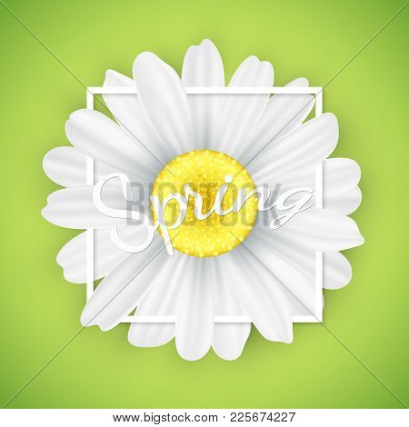 Spring Seasonal Banner. Chamomile Flower In White Frame On Green Background. Graphic Object For Your